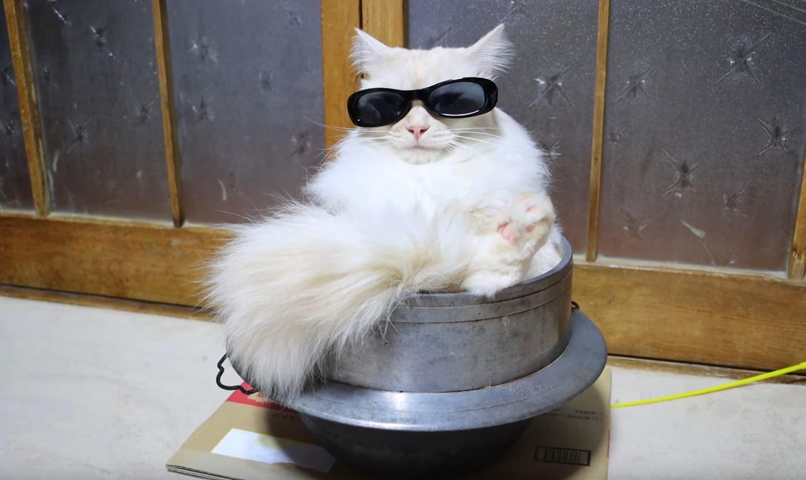 A Boss Cat Relaxing