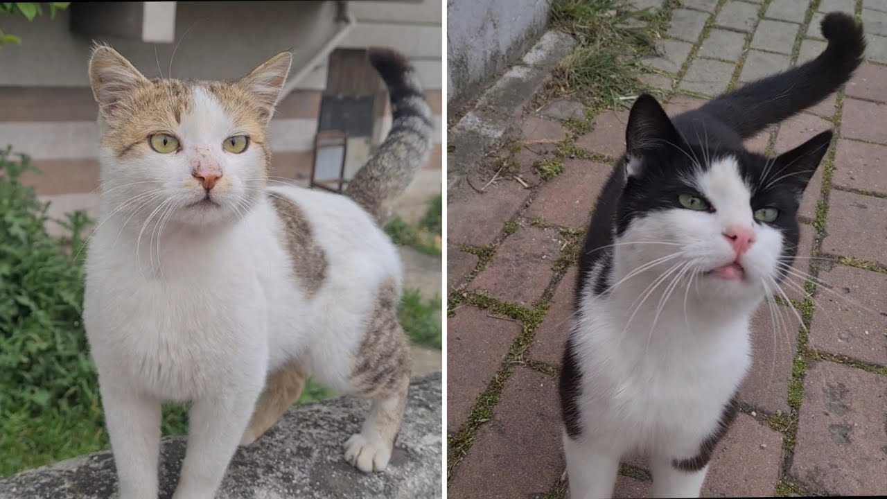 Two Really Friendly Stray Cats