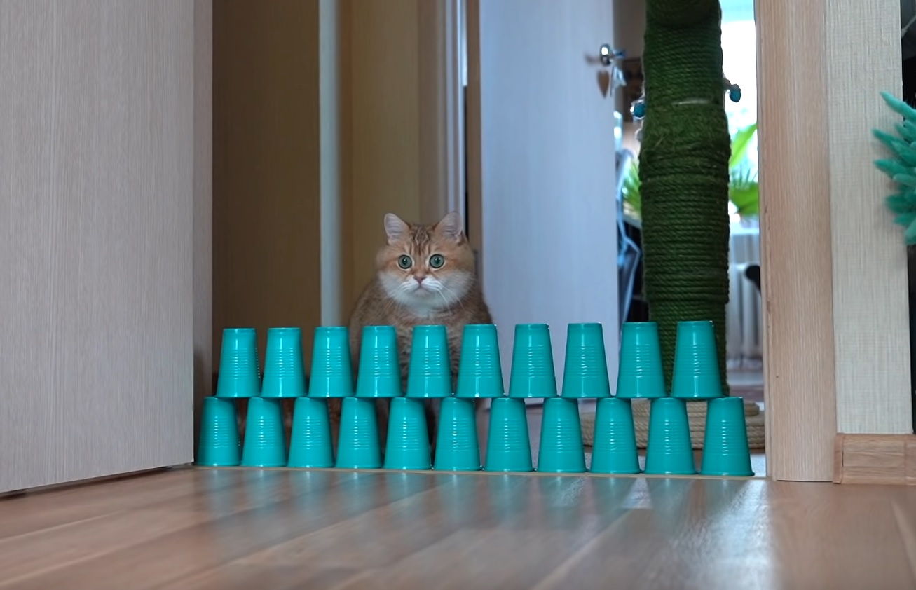 Hosico Does The Cup Challenge