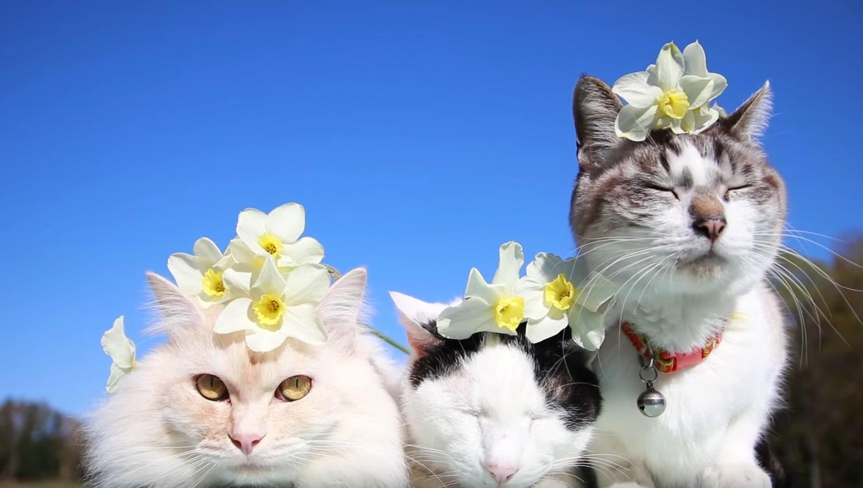 Cute Adorable Cats Outside