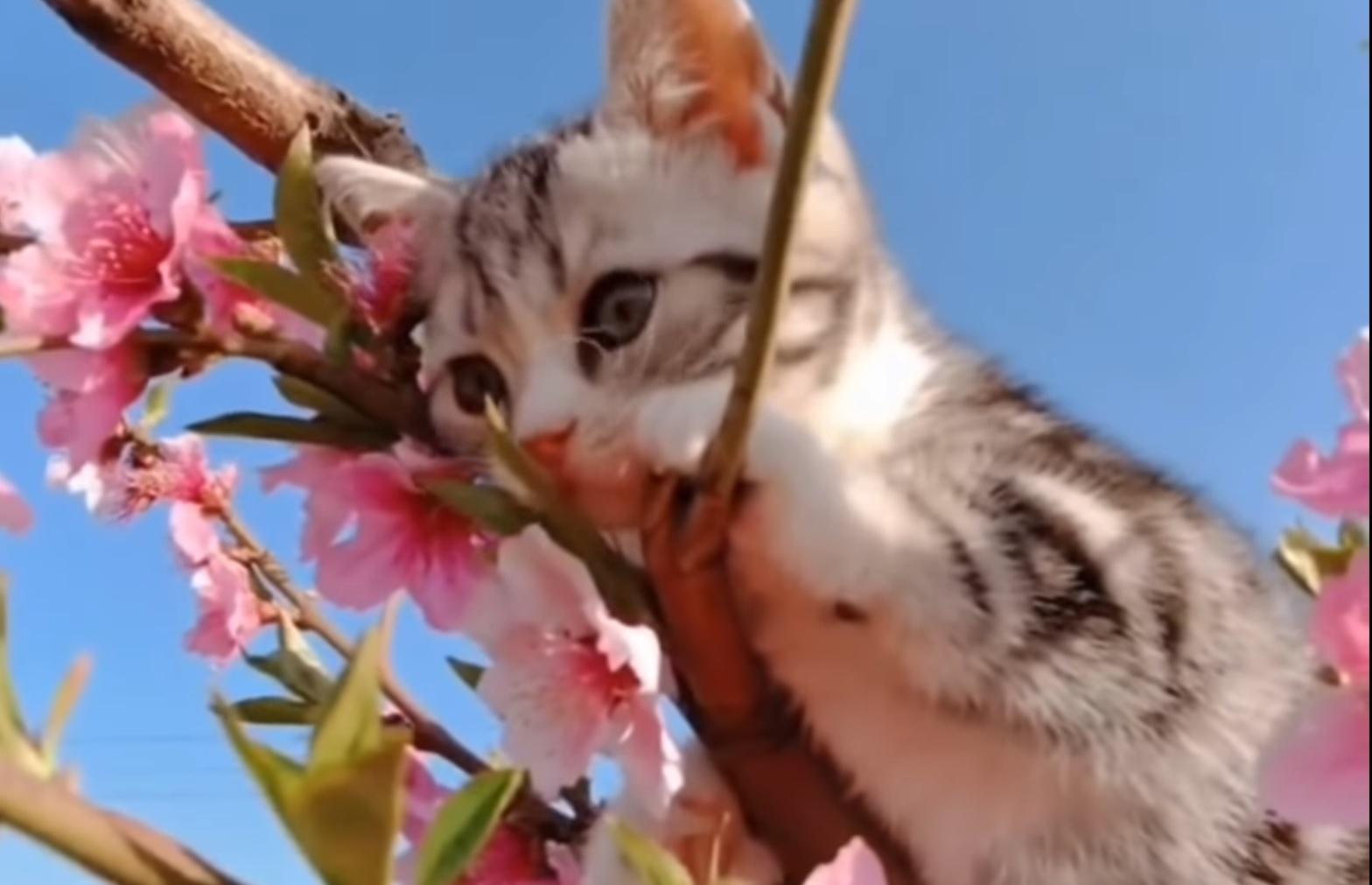 Tiny kitten Exploring Outdside