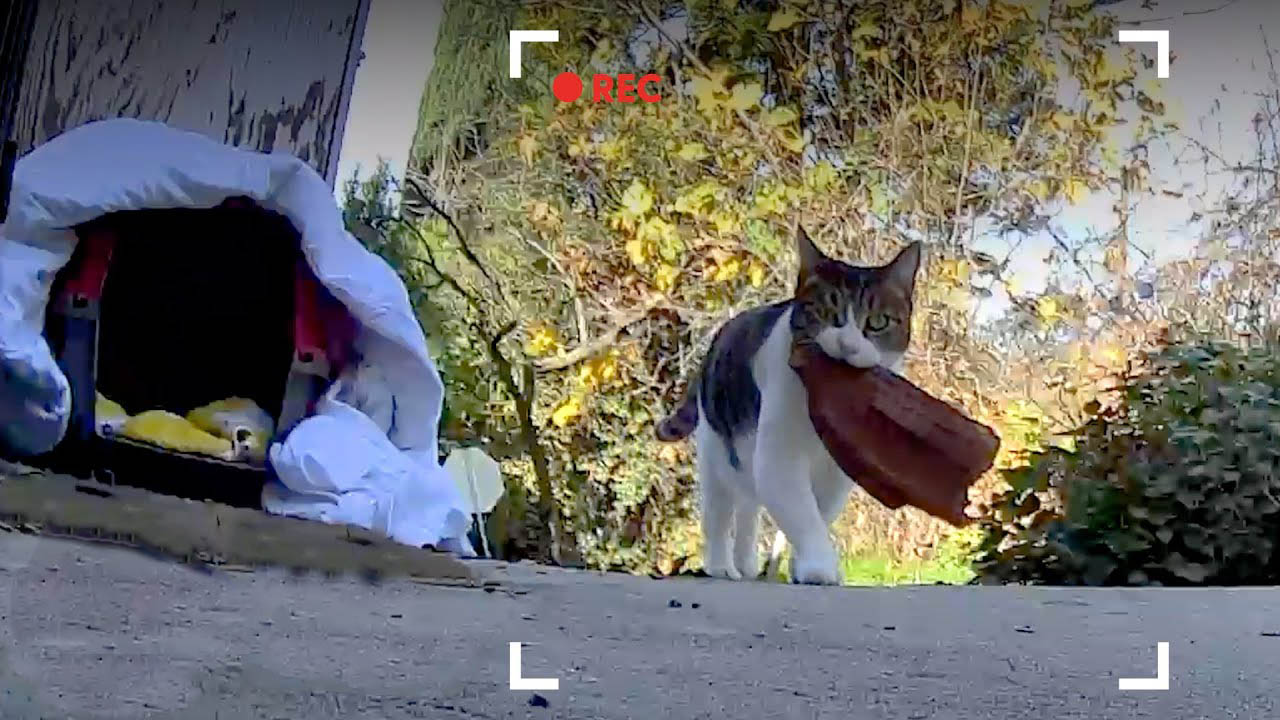 This kitty is the most skilled thief in the neighborhood