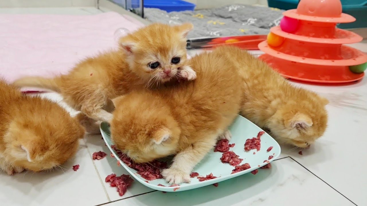 Hungry Kittens Act Like Piglets