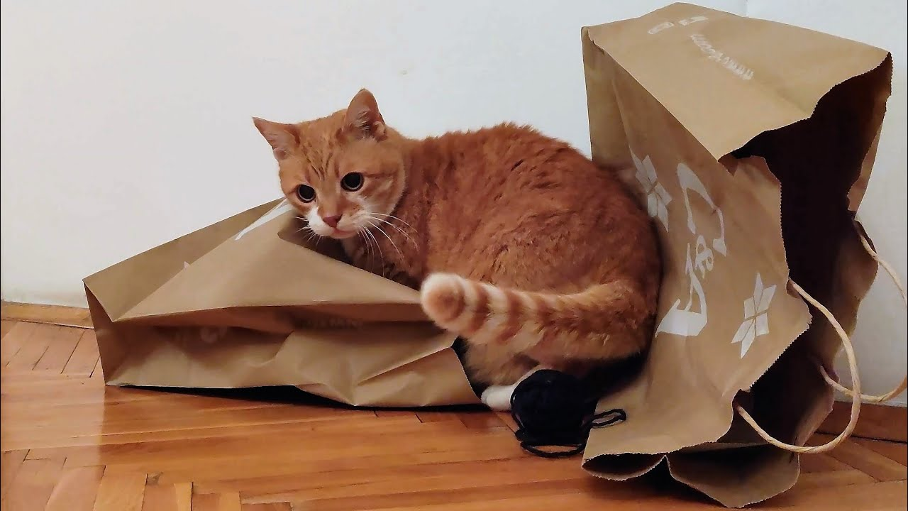 Cute Cats Play With Paper Bags