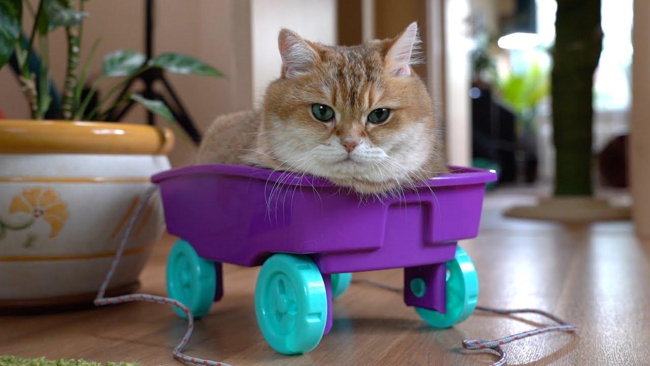 Hosico Has A New Car