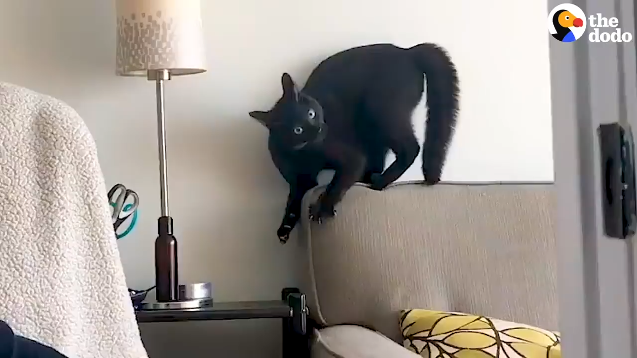 This very dramatic cat is obsessed with tiny almonds