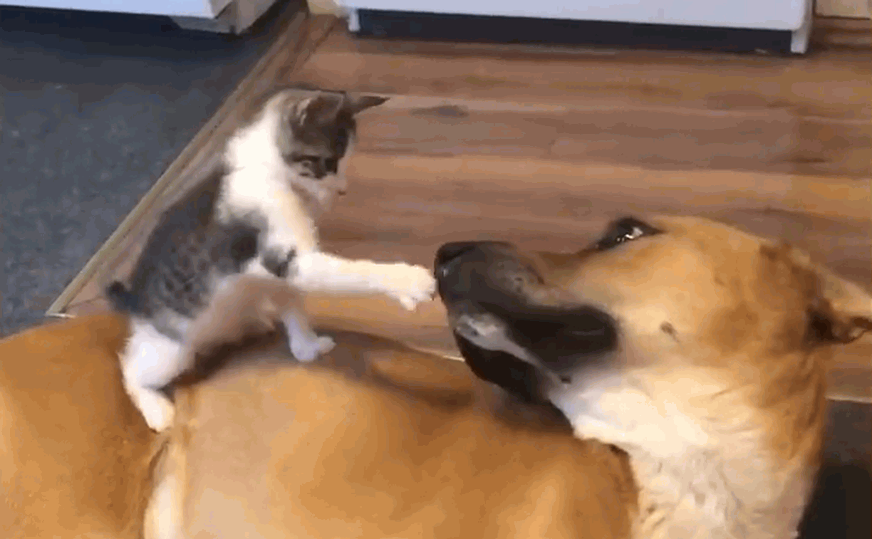Tiny kitten and dog meet first time and become brothers furever