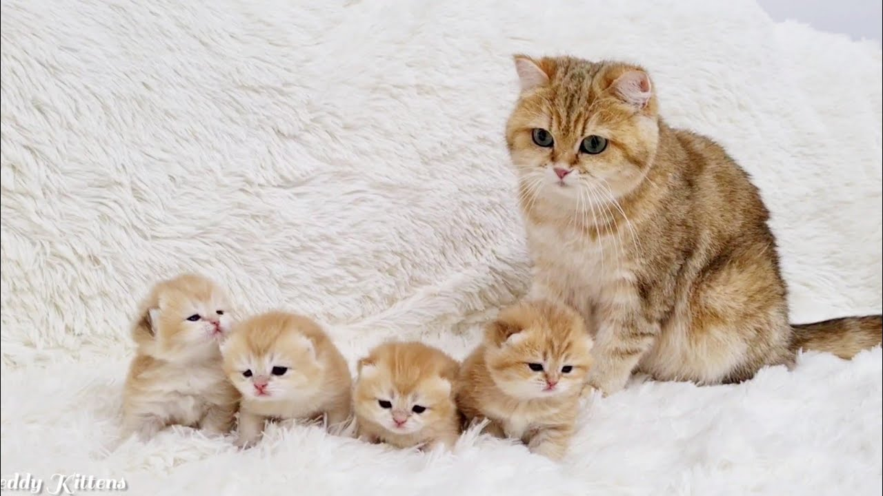 Mom Hith Her Four Kittens