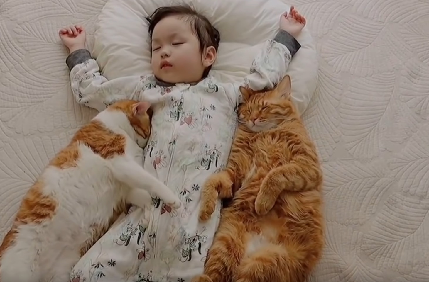 Little Girl With Her Snuggly Cats