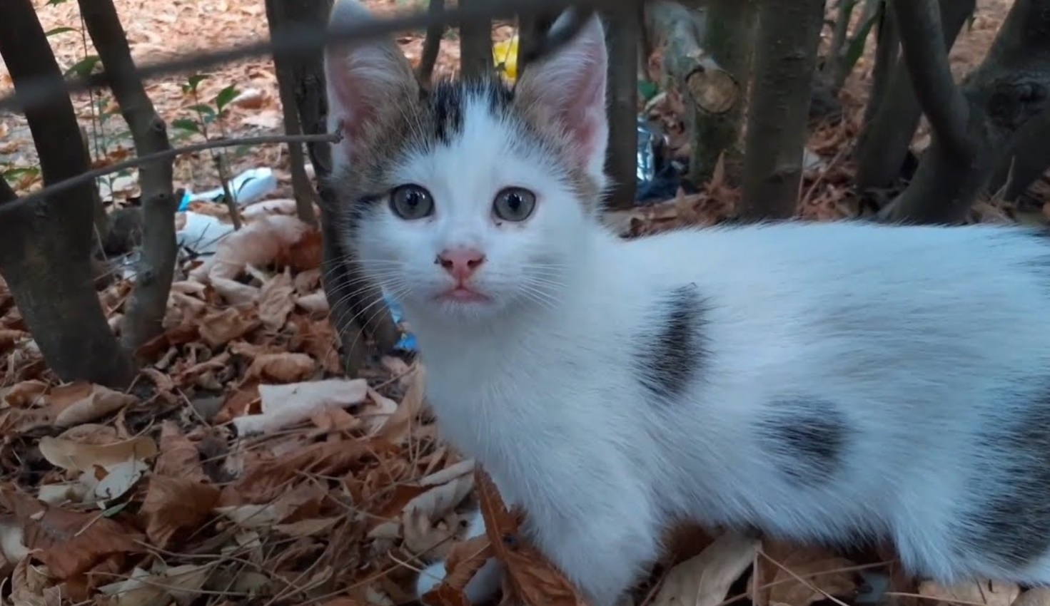 Stray Cat Has The Most Beautiful Eyes