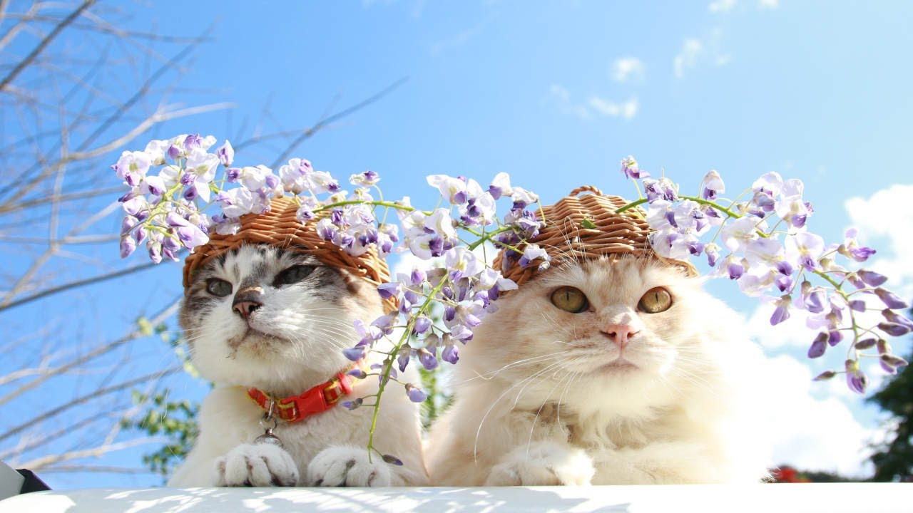 Flower Pots For Cats