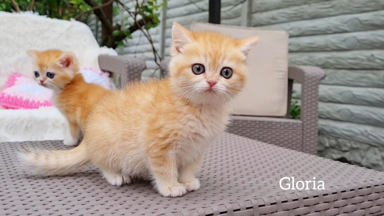 Kittens Walk Outside First Time