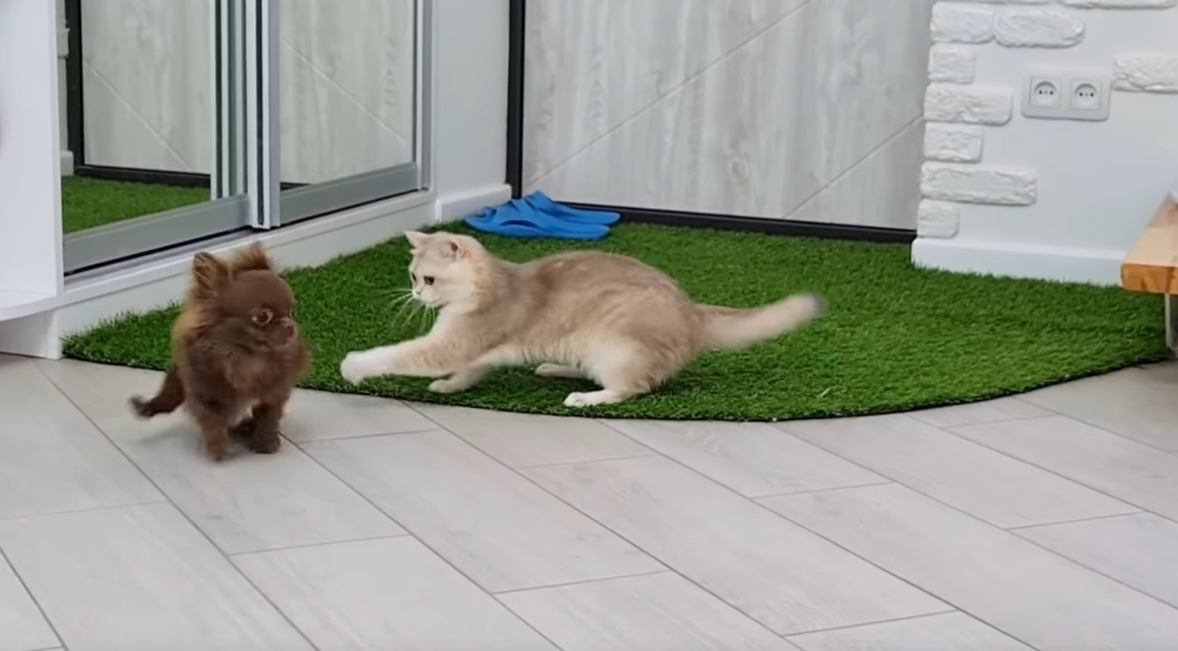 Caramel And Arnold Playing