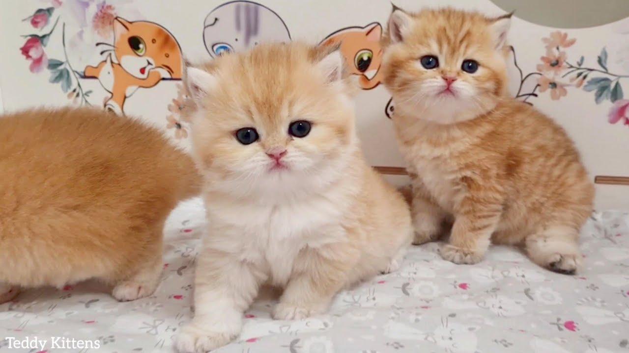 Four Kittens Exploring New Home