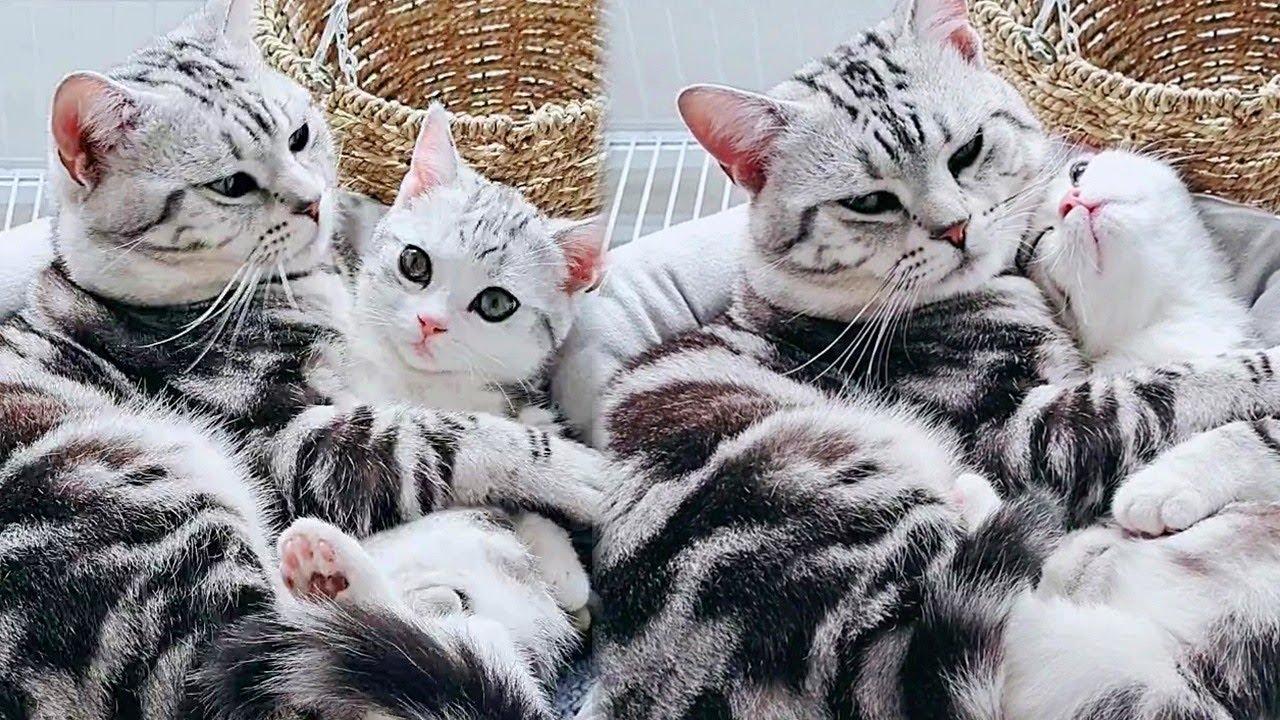 Mama And Her Super Cute Kitten