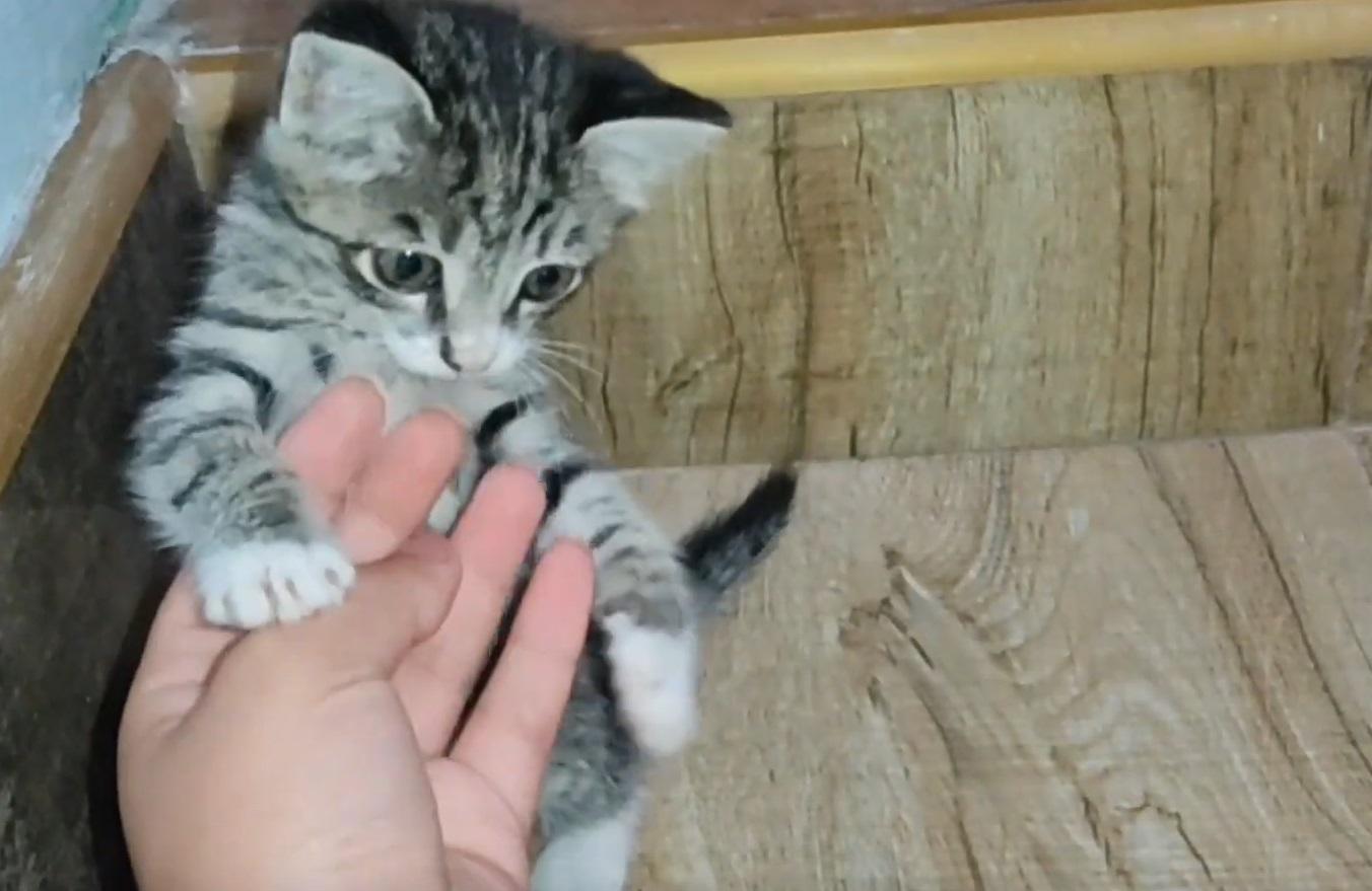 Adorable Kitten Playing