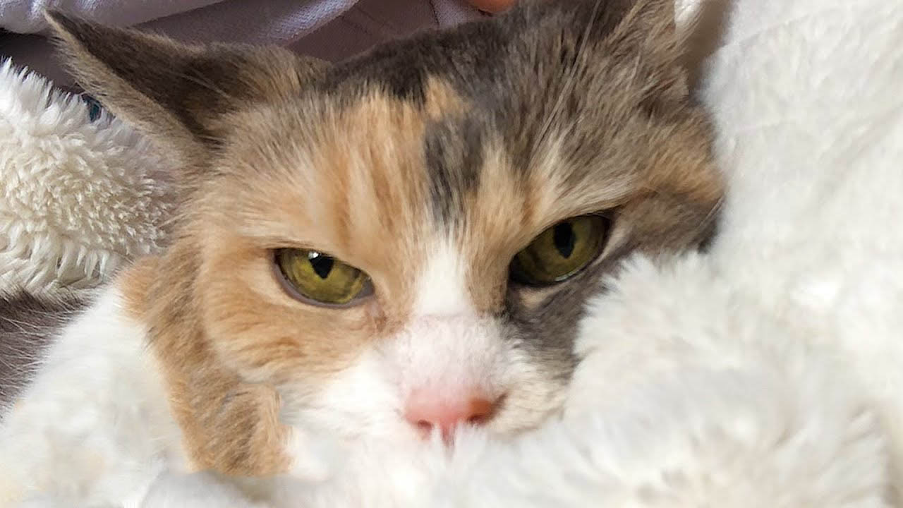 Woman adopts grumpy cat from her grandparents