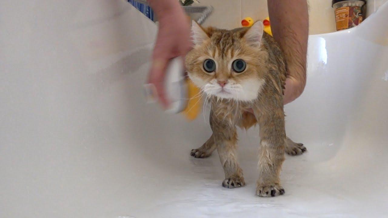 Hosico Takes A Shower