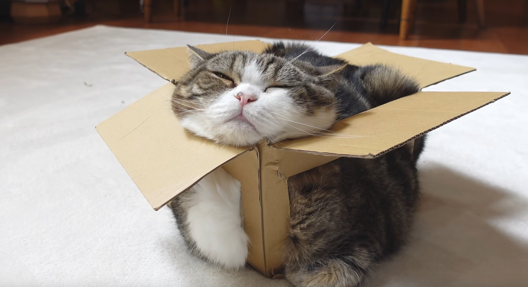 Maru And The Broken Box