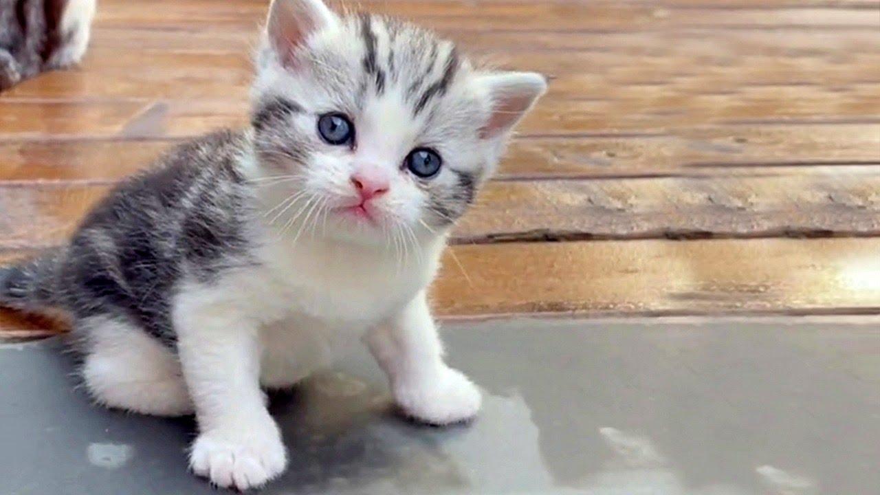 Cuteness Alert