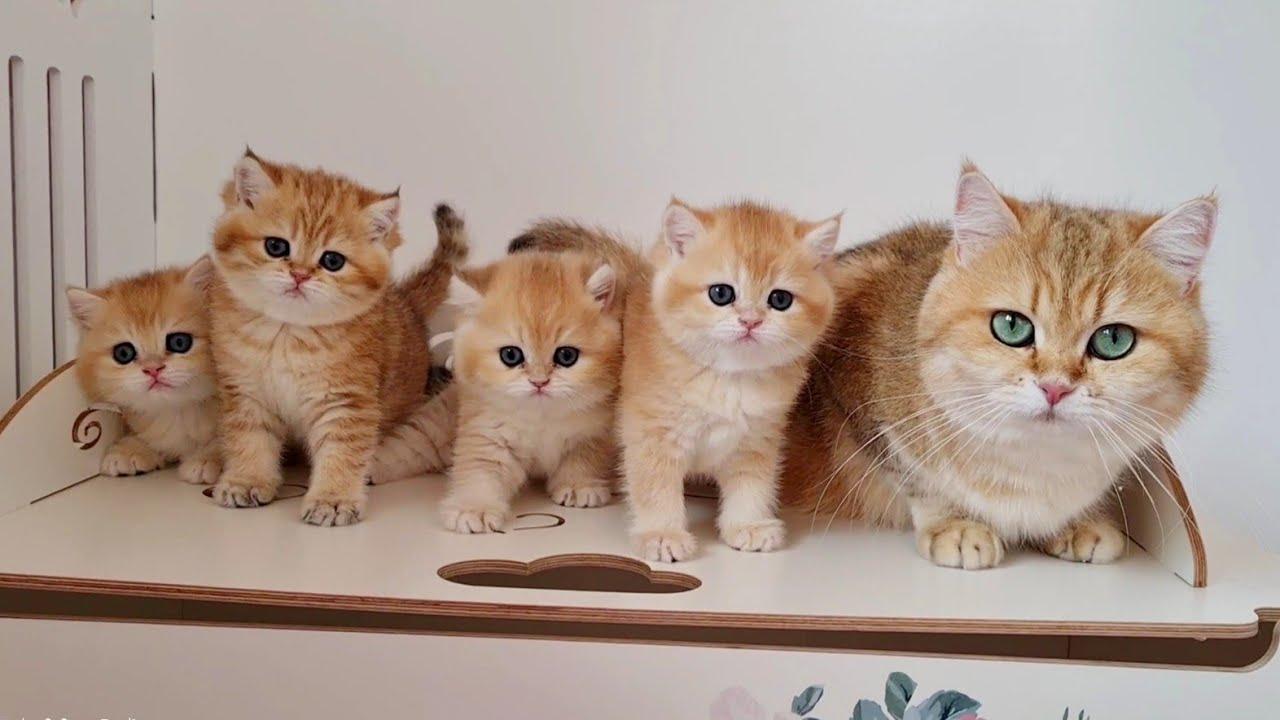 Playful Energetic Kittens