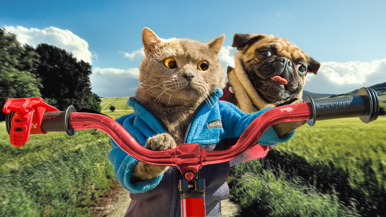 A cat and a dog on an unplanned road trip (Aaron's Animals)