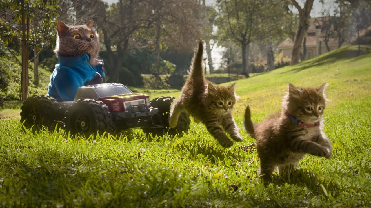 Cat needs to look after the kittens, but things get out of control (Aaron's Animals)