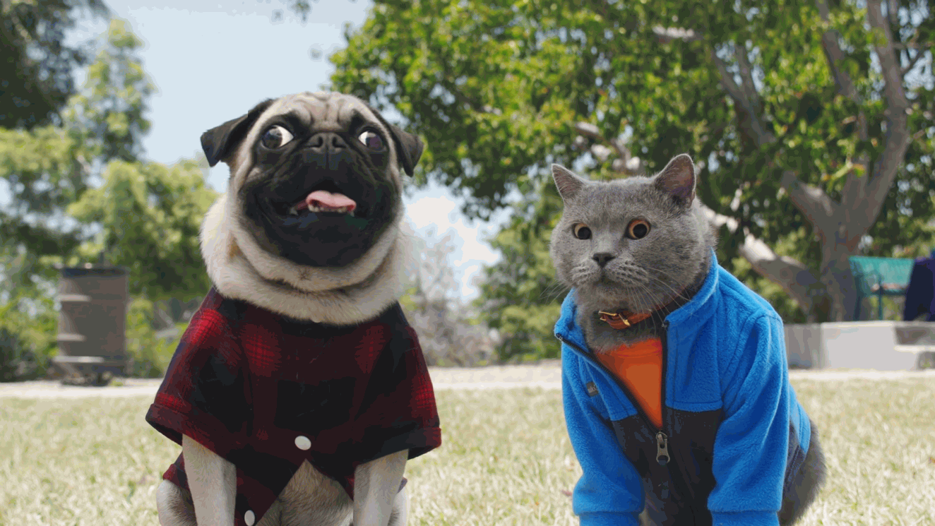 Cat helps dog to get adopted (Aaron's Animals)