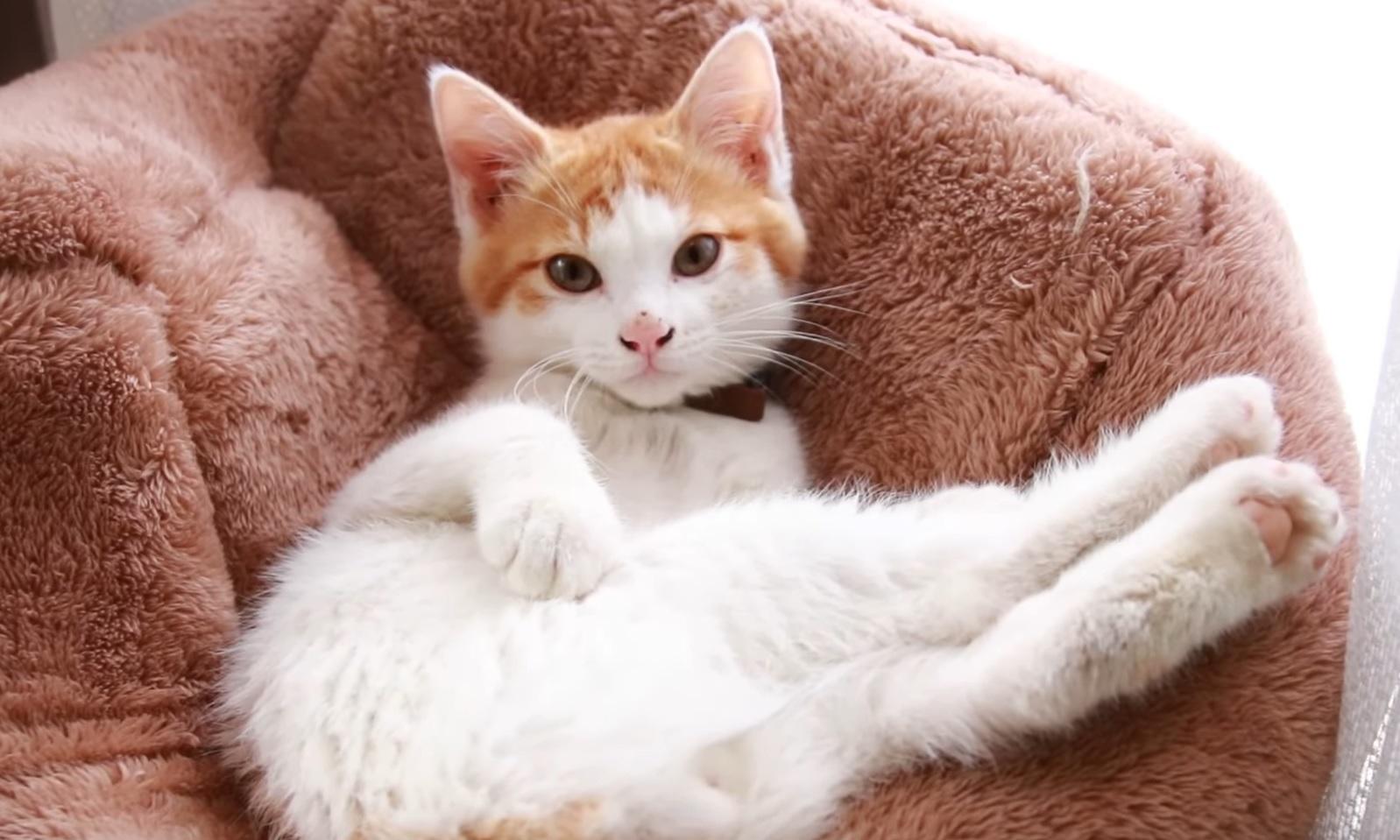 Cute Cat  Chillin