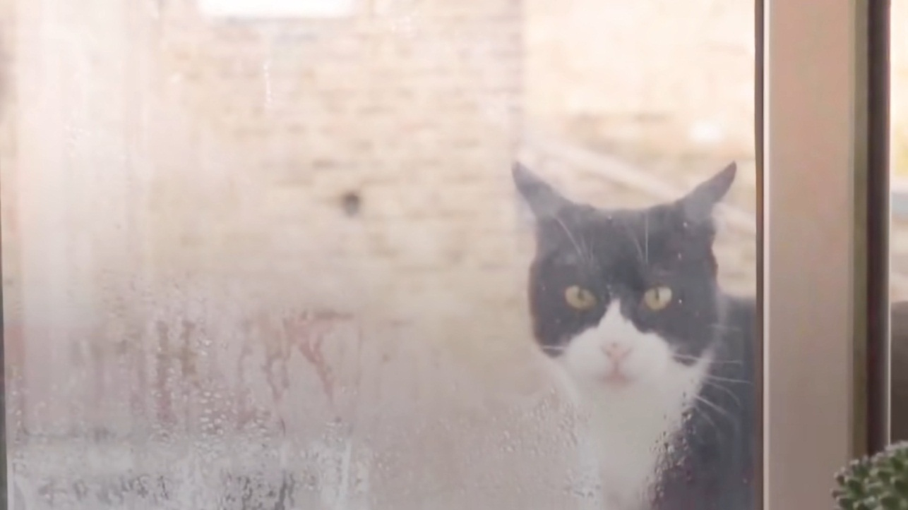 Stray cat visits guy at the window every day until he decides to stay