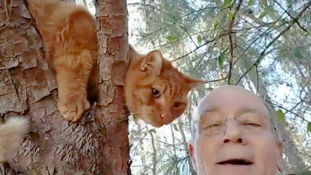 Retired man rescues more than 700 cats from trees