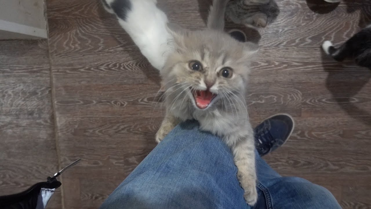 Attacked by kittens!