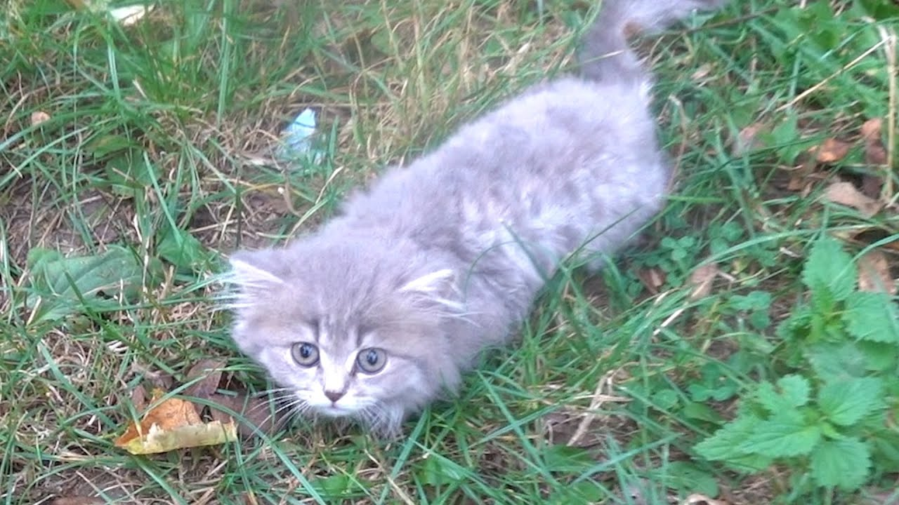 Someone abandoned this fluffy kitten in a park