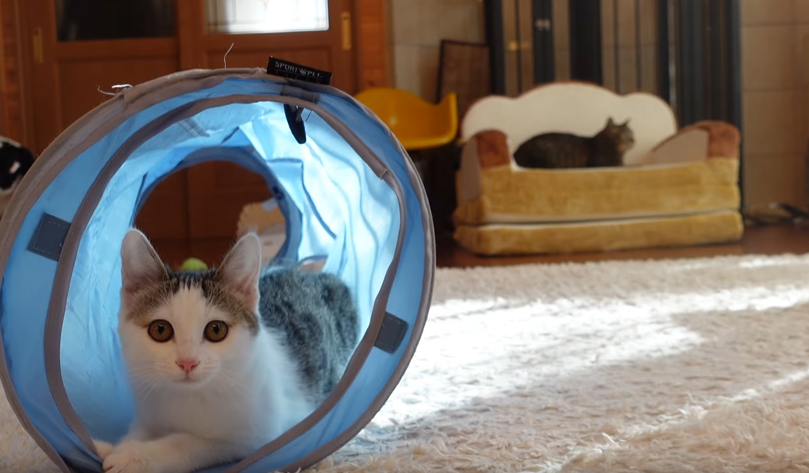 Kitten  Gets Her First  Tunnel Toy