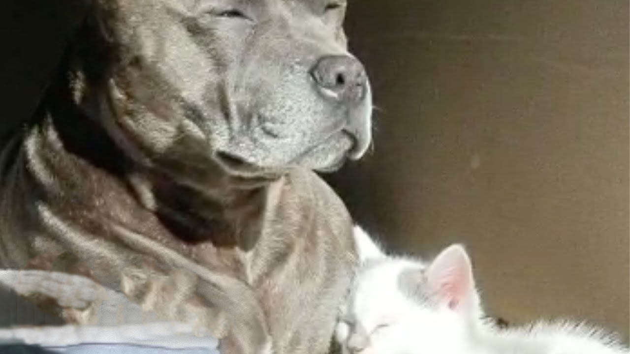 Dog is scared of a tiny rescued kitten that joined the family