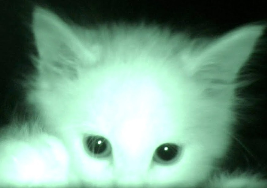What Kittens Do At Night