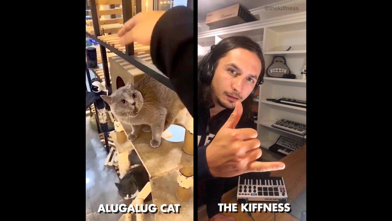 Alugalug Cat X The Kiffnes - Alugalug Song - Worldwide Hit Song