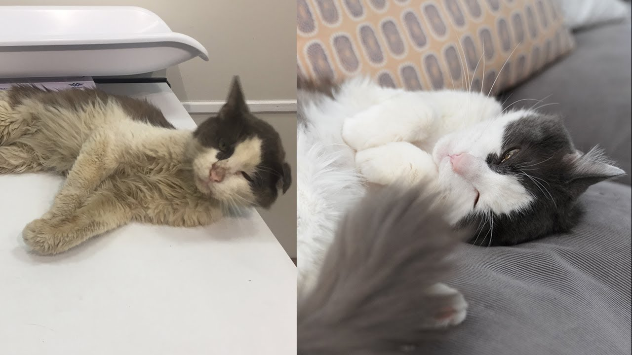 Rescuing a roughed up street cat - Before and After