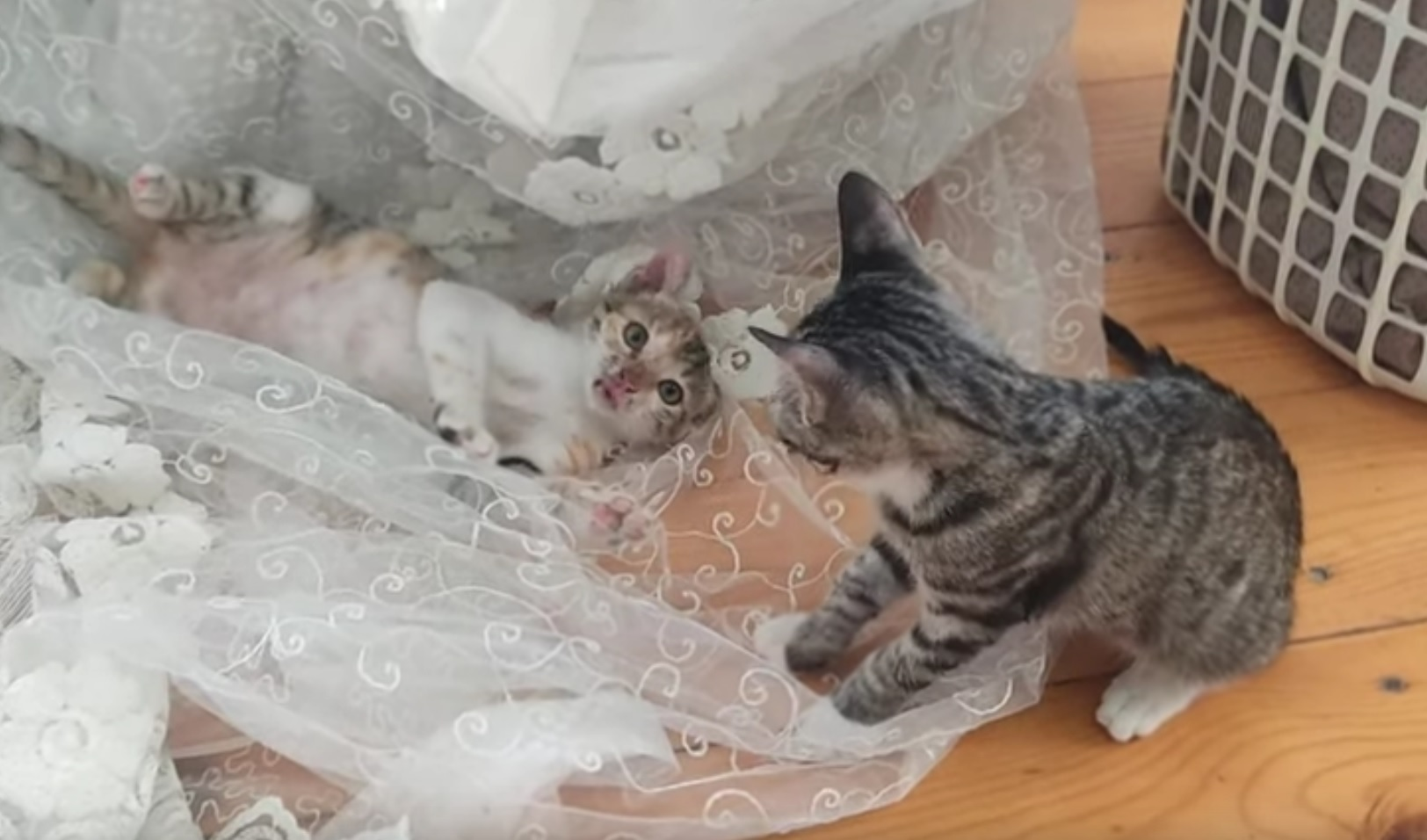 Adorable Kittens Love To Play