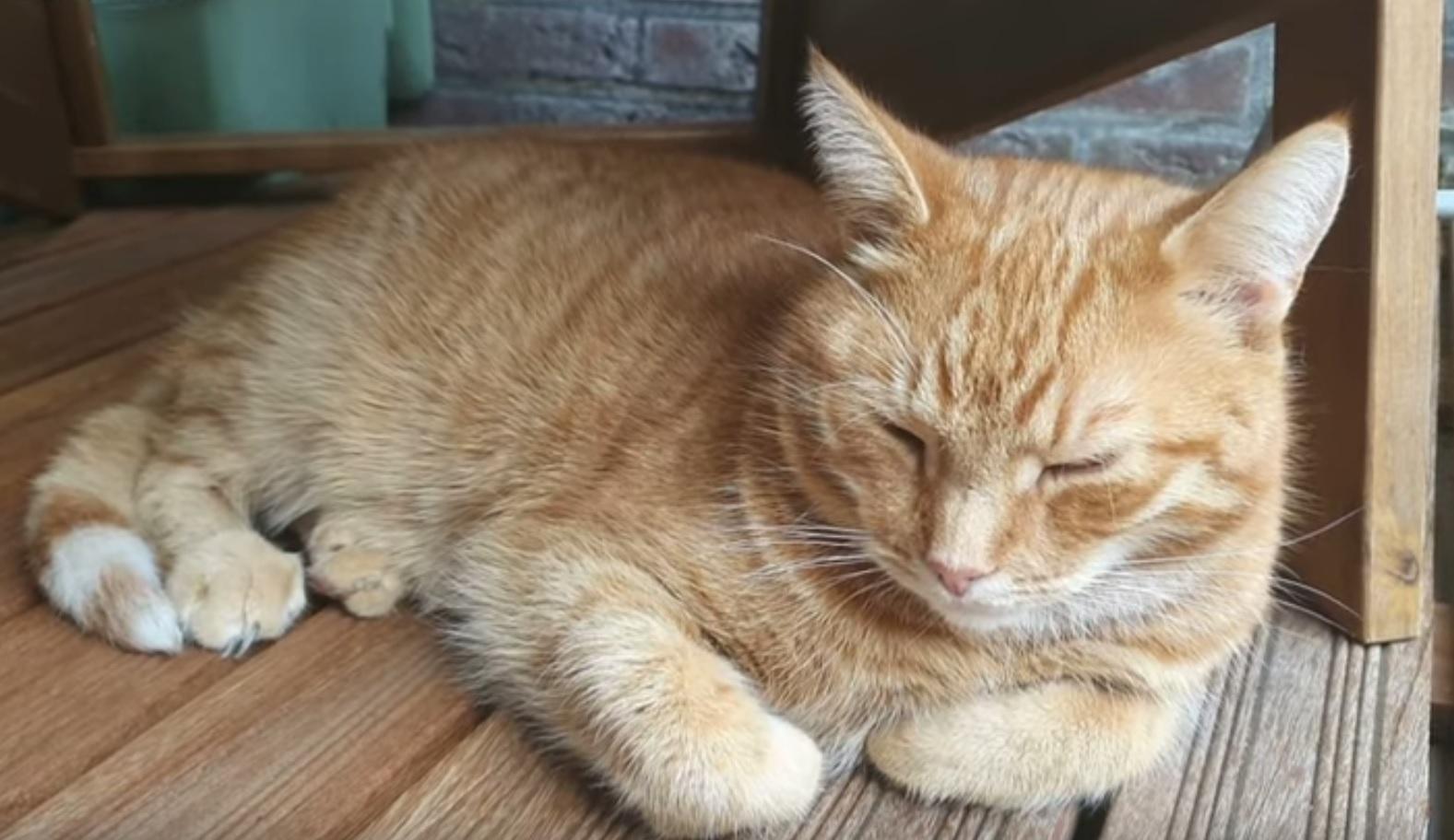 A Relaxing Cat Video