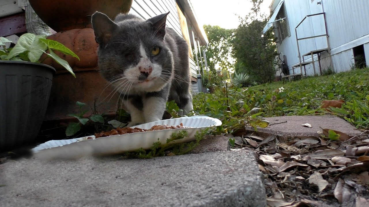 Stray cat in very bad condition becomes the sweetest house cat