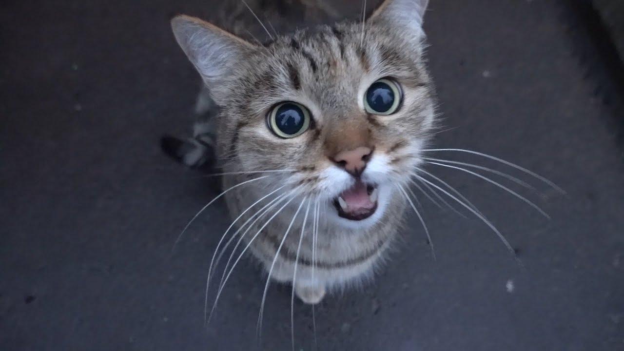 A really cute and talkative street cat