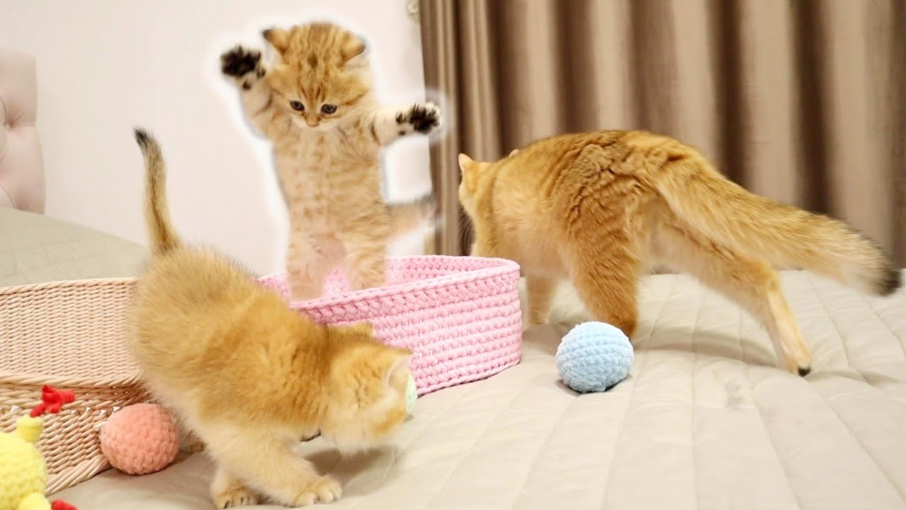Mom Watches Her Kitttens  Play