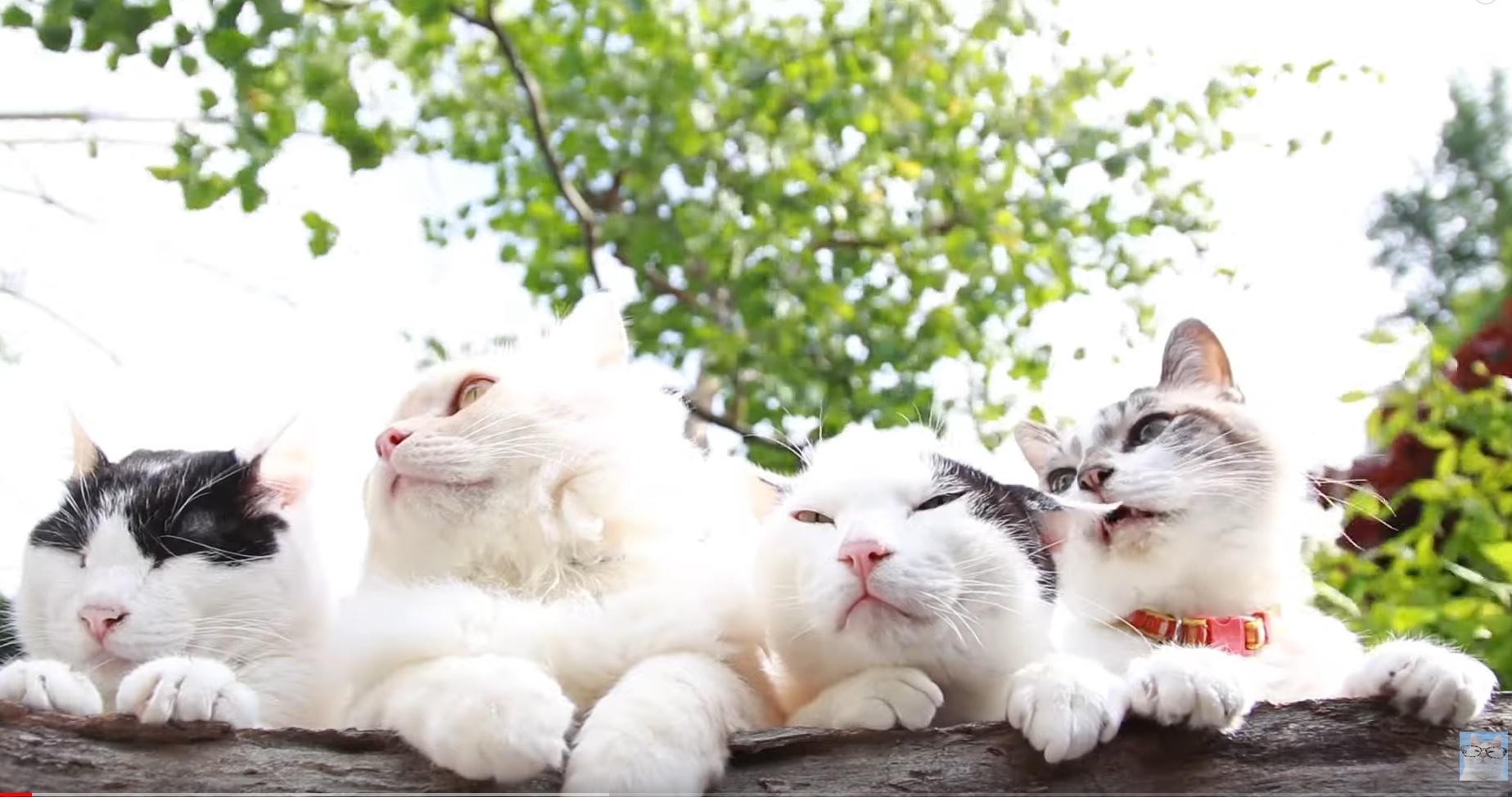 Cute Cats Relaxing Video