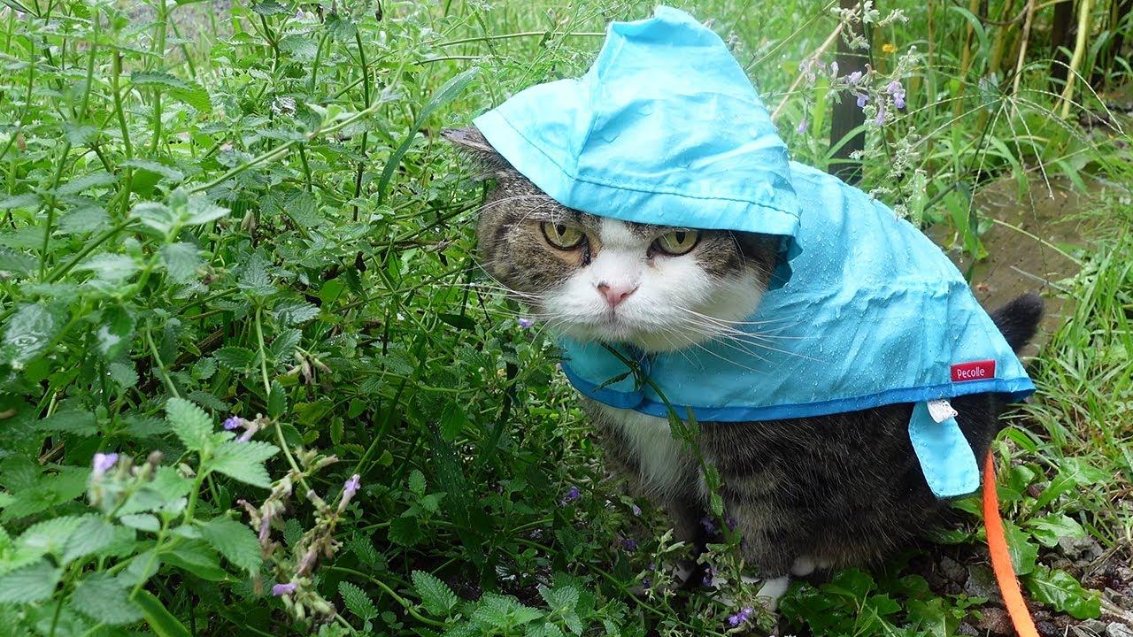 Maru Takes A Walk In Raincoat Video