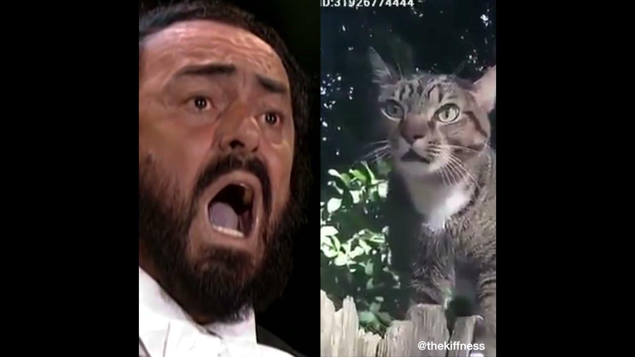 Pavarotti Vs Catarotti