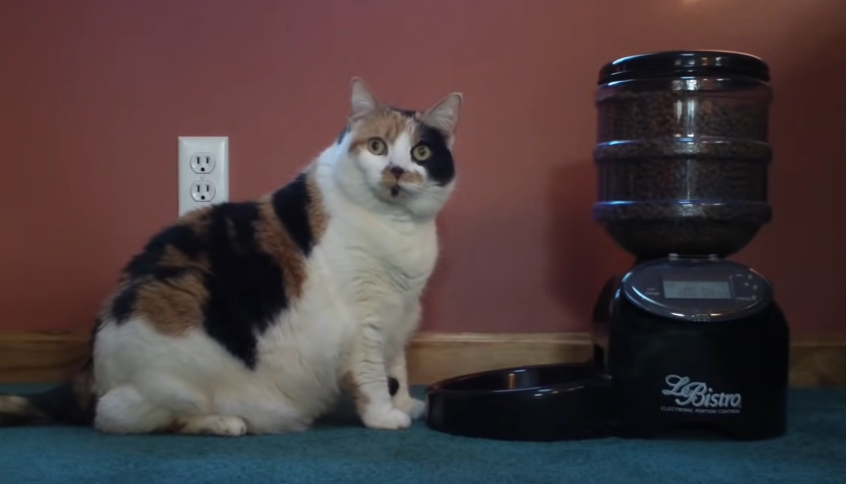 Miss Kitty Outsmarts Food Dispenser