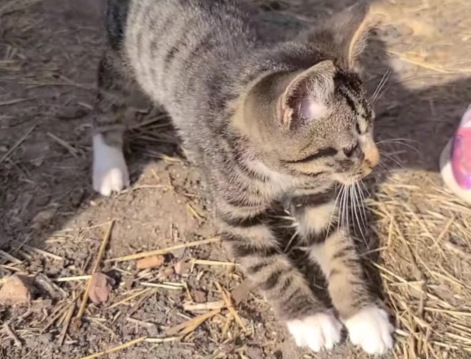 Cute Little Kitty Sneeze