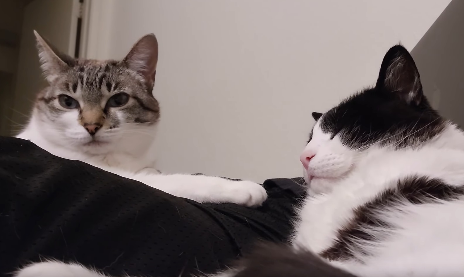Cute Cats Chillin On Bed