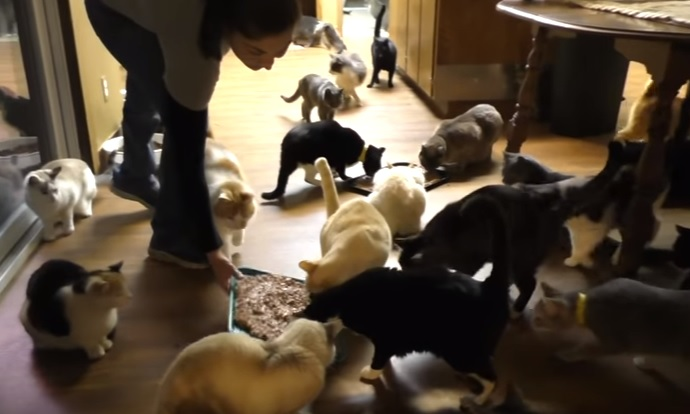 A Day at The Cat House on the Kings